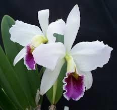 An orchid extravaganza @ Casterbridge (18-20 October)