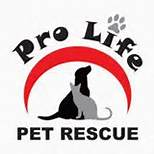 Celebrate with furry friends @ Pro-Life Pet Rescue