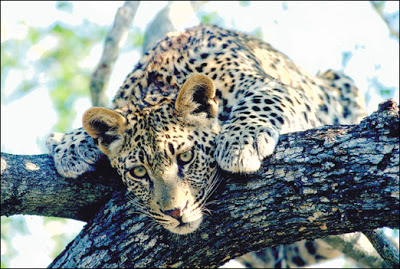 SANParks bookings for June & July 2021, opens Wednesday 22 July 2021