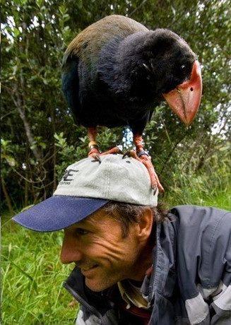 Webinar:  The Road to 9000 with BirdLife SA